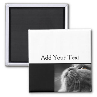 Grey Persian Cat on Black Border Square Magnet