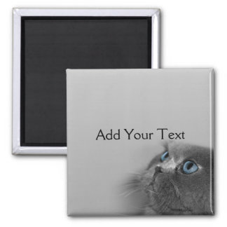 Grey Persian Cat with Blue Eyes on Grey Square Magnet