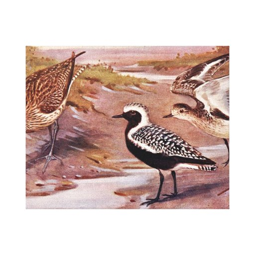 Grey Plovers and a Whimbrel Gallery Wrapped Canvas