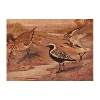 Grey Plovers and a Whimbrel Cork Fabric