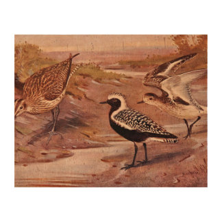 Grey Plovers and a Whimbrel Photo Cork Paper