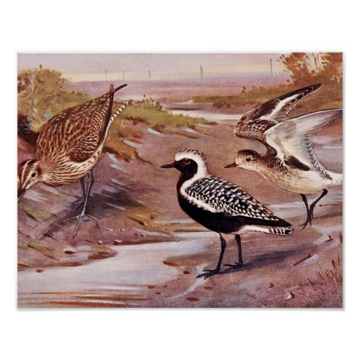 Grey Plovers and a Whimbrel Poster
