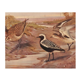 Grey Plovers and a Whimbrel Wood Canvas