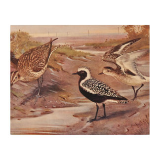 Grey Plovers and a Whimbrel Wood Print