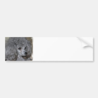 Grey Poodle Bumper Sticker
