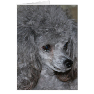 Grey Poodle Note Card