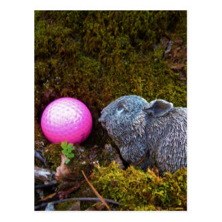 Grey Rabbit with Pink Golf Ball Postcard