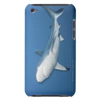 Grey reef shark (Carcharhinus amblyrhynchos) iPod Touch Case