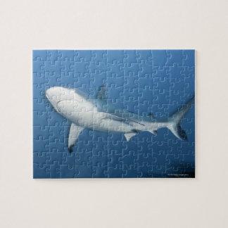 Grey reef shark (Carcharhinus amblyrhynchos) Jigsaw Puzzle