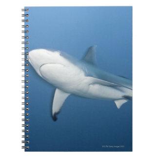 Grey reef shark (Carcharhinus amblyrhynchos) Notebook