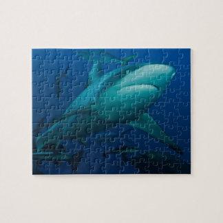 Grey Reef Shark Great Barrier Reef Jigsaw Puzzle