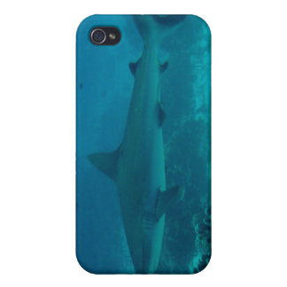 Grey Reef Shark Swimming iPhone 4/4S Cases