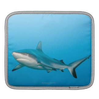 Grey reef sharks (Carcharhinus amblyrhnchos) iPad Sleeve