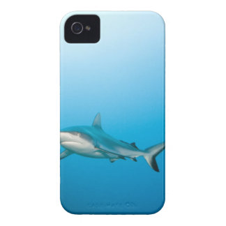 Grey reef sharks (Carcharhinus amblyrhnchos) iPhone 4 Case