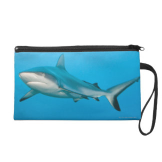 Grey reef sharks (Carcharhinus amblyrhnchos) Wristlet