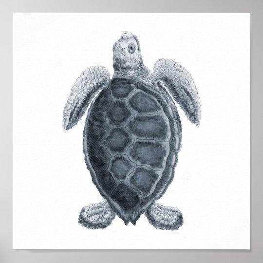 Grey Sea Turtle Sealife Group12A print #7