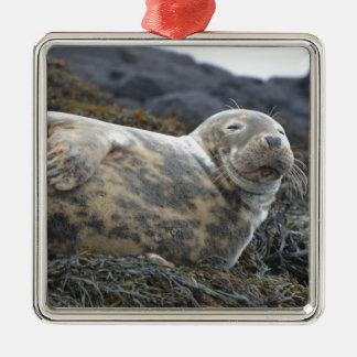 Grey Seal Christmas Tree Ornament