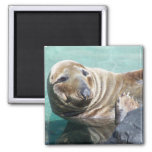 Grey Seal Portrait Magnets