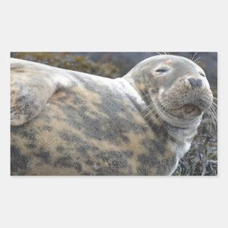 Grey Seal Rectangular Sticker