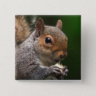 Grey Squirrel 15 Cm Square Badge