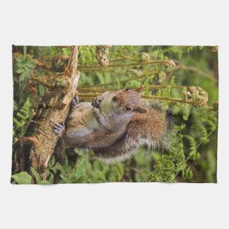 Grey Squirrel American Mojo Kitchen Towel/TeaTowel Tea Towel
