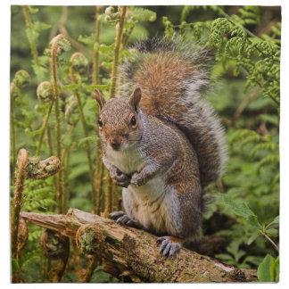 Grey Squirrel American Mojo Napkins