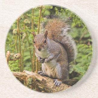 Grey Squirrel Coaster