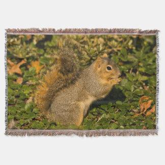Grey Squirrel, eating, peanut, Crystal Springs 2 Throw Blanket