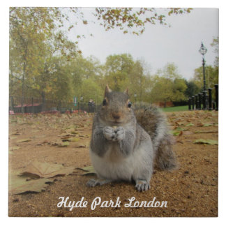 Grey Squirrel Hyde Park London. Tile