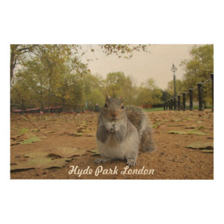 Grey Squirrel Hyde Park London. Wood Wall Art