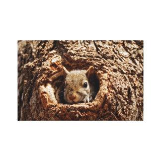 Grey Squirrel in a Hole Canvas