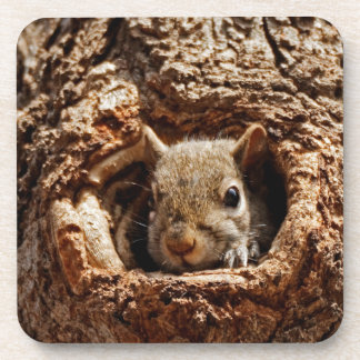Grey Squirrel in a Hole Coaster