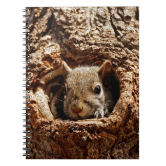 Grey Squirrel in a Hole Notebook