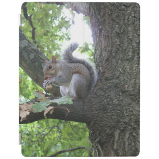 Grey squirrel in a tree eating a chestnut iPad cover
