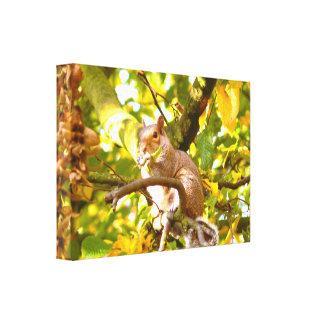 Grey Squirrel in Autumn Canvas Prints