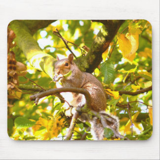 Grey Squirrel in Autumn Mouse Pad