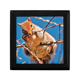 Grey squirrel in the tree gift box