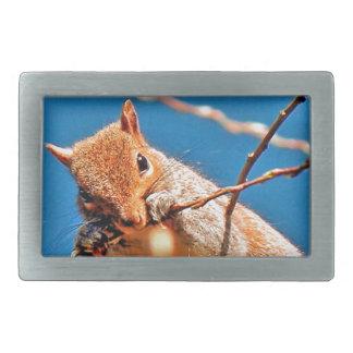 Grey squirrel in the tree rectangular belt buckle