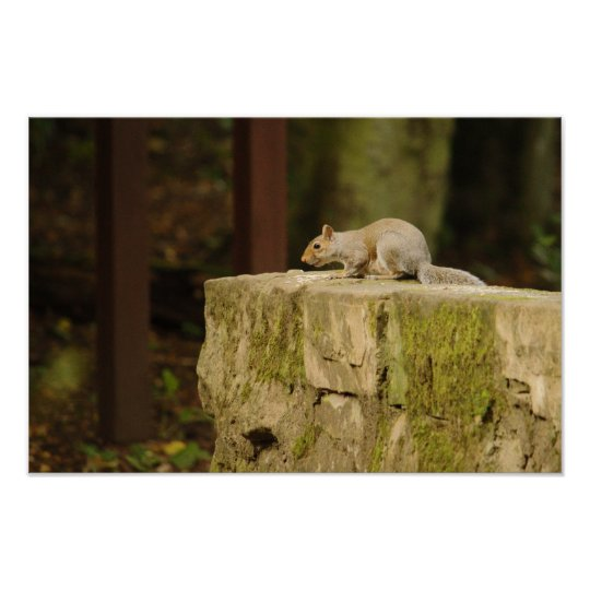 Grey Squirrel On Bridge Poster