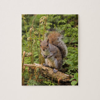 Grey Squirrel Puzzle/Jigsaw with Tin Jigsaw Puzzle