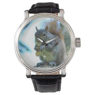 Grey Squirrel Watch