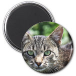 Grey Stripe Cat with Green Eyes Refrigerator Magnet