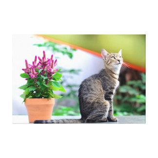 grey striped cat celosia argentea magenta flower canvas print
