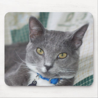 grey tabby cat mousepad