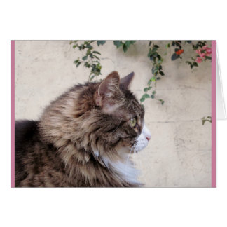 Grey Tabby Cat With Flowers Card