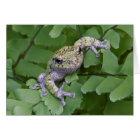 Grey tree frog on fern, Canada Card