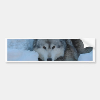 Grey wolf bumper sticker