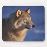 grey wolf, Canis lupus, in the foothills of 2 Mouse Pad