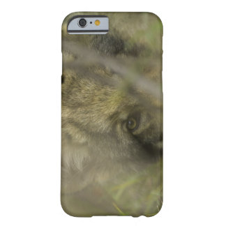 Grey wolf (Canis lupus) pup alone, hiding in Barely There iPhone 6 Case