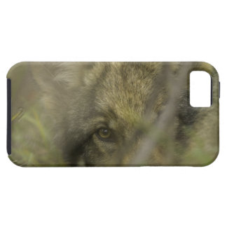 Grey wolf (Canis lupus) pup alone, hiding in Case For The iPhone 5